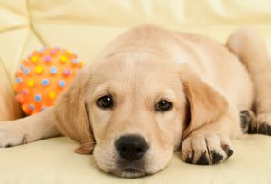 Pet Urine and odor Removal by North County Carpet Cleaning in Vancouver, WA